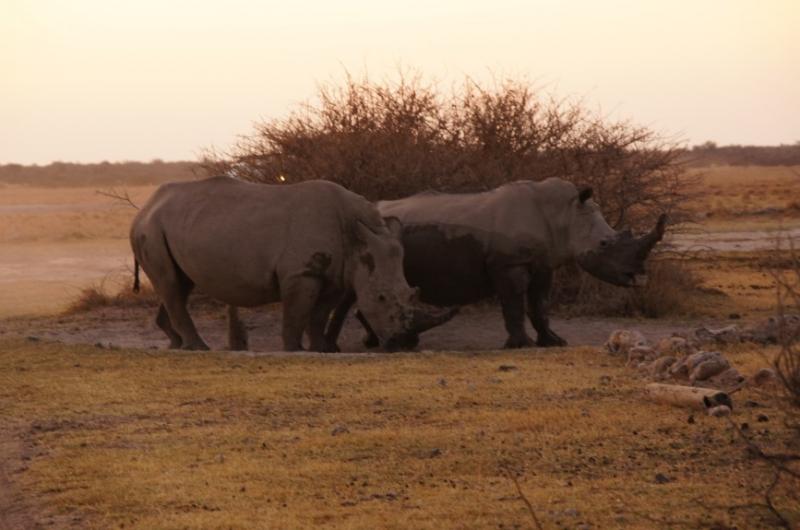 2016-Südafrika-01 - 14235830342014-08-18_Rhinos.jpg