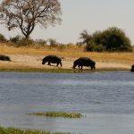 2016-Südafrika-01 - 14235839842014-08-23_Hippos.jpg