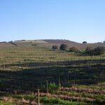2016-Südafrika-01 - 142602446510Stellenbosch_Wein.jpg